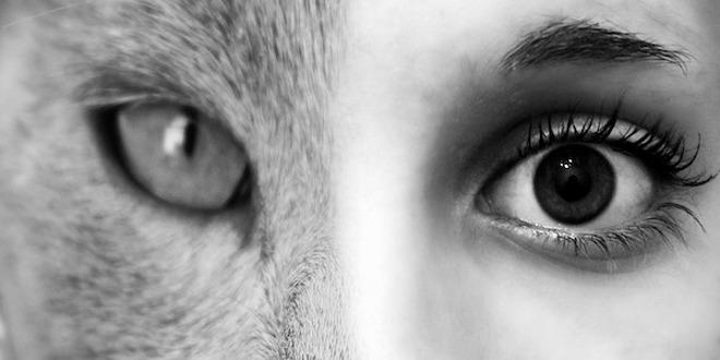 Conéctate con tu animal espiritual