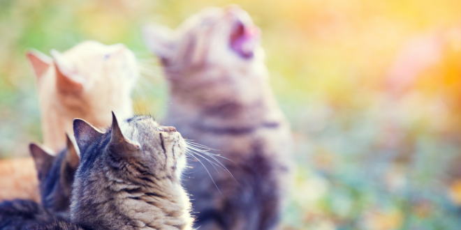 The Spiritual Meaning Behind Your Cat's Fur Color
