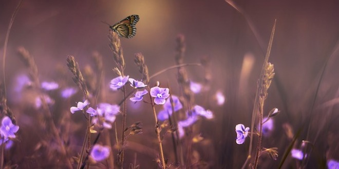 12 flores y sus significados