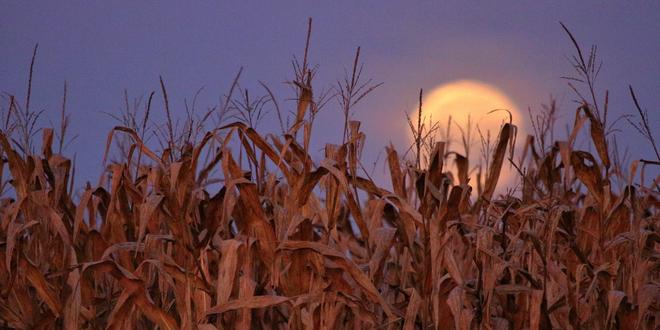 4 ways to celebrate the Autumnal Equinox around the world